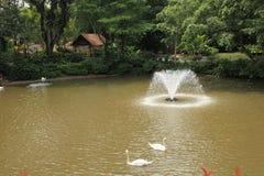 句容飞禽公园在新加坡 库存图片