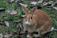 另一个兔宝宝在似乎的我的公园由我的照相机intrested 图库摄影