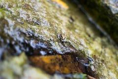 另一只微小的青蛙 库存图片