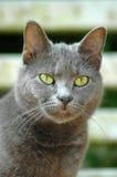 另一只猫 免版税库存照片