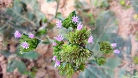 另一朵美丽的野花 免版税库存照片