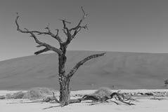 另一棵孤立树在纳米比亚沙漠 库存图片
