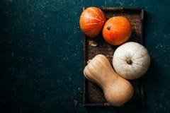 另外大小、形式和颜色南瓜品种  免版税图库摄影