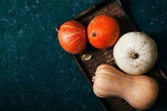 另外大小、形式和颜色南瓜品种  免版税库存图片