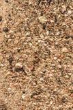 另外大小沙子、在水下的石头和叶子在阳光下,抽象背景 库存图片