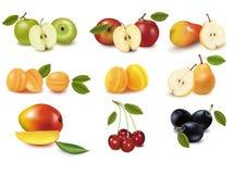 另外果子组排序向量 图库摄影