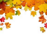 另外的秋天卡片形式 免版税库存照片