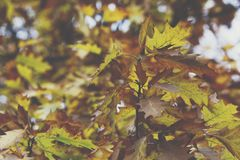 8另外的eps格式以图例解释者橡树 秋天 秋天场面 秀丽自然场面树和leav 免版税库存图片