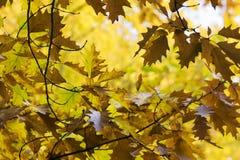 8另外的eps格式以图例解释者橡树 秋天 秋天场面 秀丽自然场面树和leav 库存图片