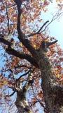 8另外的eps格式以图例解释者橡树 免版税库存照片