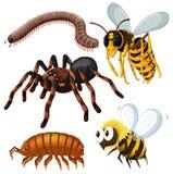 另外种类危险昆虫 皇族释放例证