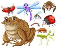 另外种类昆虫 库存例证
