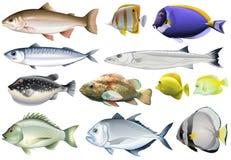 另外种类海洋鱼 皇族释放例证