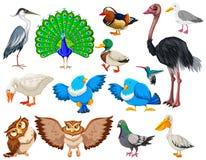 另外种类野生鸟 向量例证