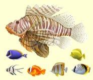 另外种类鱼 免版税库存图片