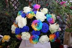 另外色的,蓝色和白玫瑰花球在庭院里 库存照片
