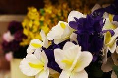 另外花紫罗兰花束 免版税图库摄影