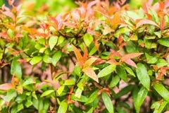 另外绿色灌木和草本背景 库存图片