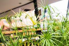 另外绿色灌木和草本背景 免版税库存图片