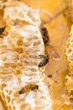 8只另外的蜂eps格式蜂窝以图例解释者 库存照片