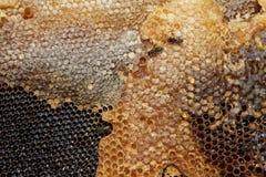 8只另外的蜂eps格式蜂窝以图例解释者 免版税库存照片