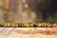8只另外的蜂eps格式蜂窝以图例解释者 免版税库存图片
