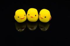 3只小鸡 免版税库存照片