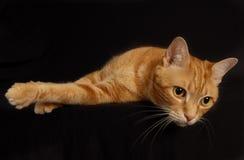 4只猫作用 免版税图库摄影