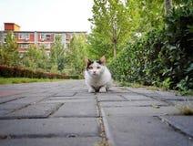 2只猫狩猎 免版税库存图片