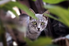 12只猫kuzia o纵向高级y 免版税库存图片