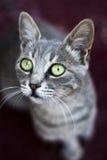 12只猫kuzia o纵向高级y 库存照片