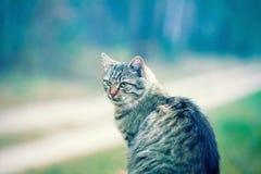 12只猫kuzia o纵向高级y 库存图片