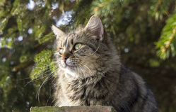 12只猫kuzia o纵向高级y 免版税库存照片