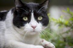 12只猫kuzia o纵向高级y 图库摄影