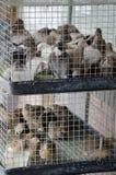 2只笼子充满小鸟在一个室外市场上 免版税库存图片