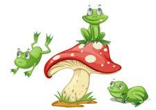 3只青蛙 库存照片