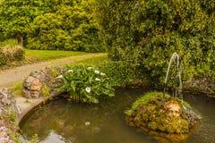 叫作马蹄莲aethiopica的acquatic白色水芋百合 库存图片