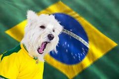 叫喊的狗世界杯 免版税库存照片