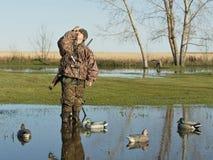 叫鸭子的猎人鸭子 免版税库存照片