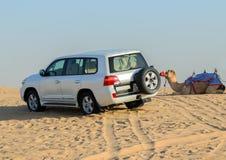 召集驾驶在沙子du的越野汽车4x4冒险骆驼徒步旅行队 免版税库存图片