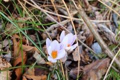 可以在森林找到在1月的花 图库摄影