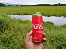 可口可乐铝罐饮料与甜叶菊的 库存图片