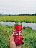 可口可乐铝罐饮料与甜叶菊的 免版税库存图片