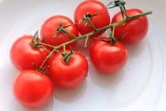 可口小红色蕃茄 库存图片