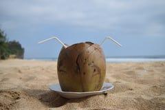 可口年轻椰子 免版税库存照片
