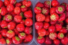 可口新鲜的草莓 免版税库存照片