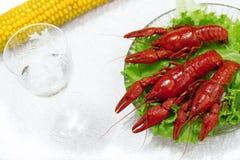 可口煮沸的龙虾盘 图库摄影