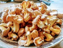 可口狂放的蘑菇篮子  免版税库存图片