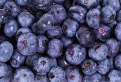 可口的蓝莓 免版税库存图片