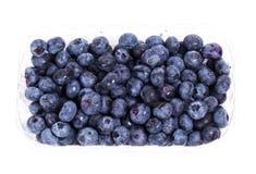 可口的蓝莓 库存图片